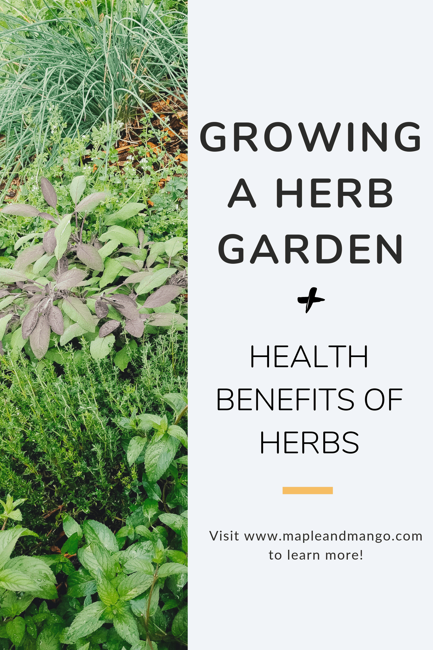 "variety of fresh herbs with text saying ""Growing a Herb Garden + Health Benefits of Herbs"""