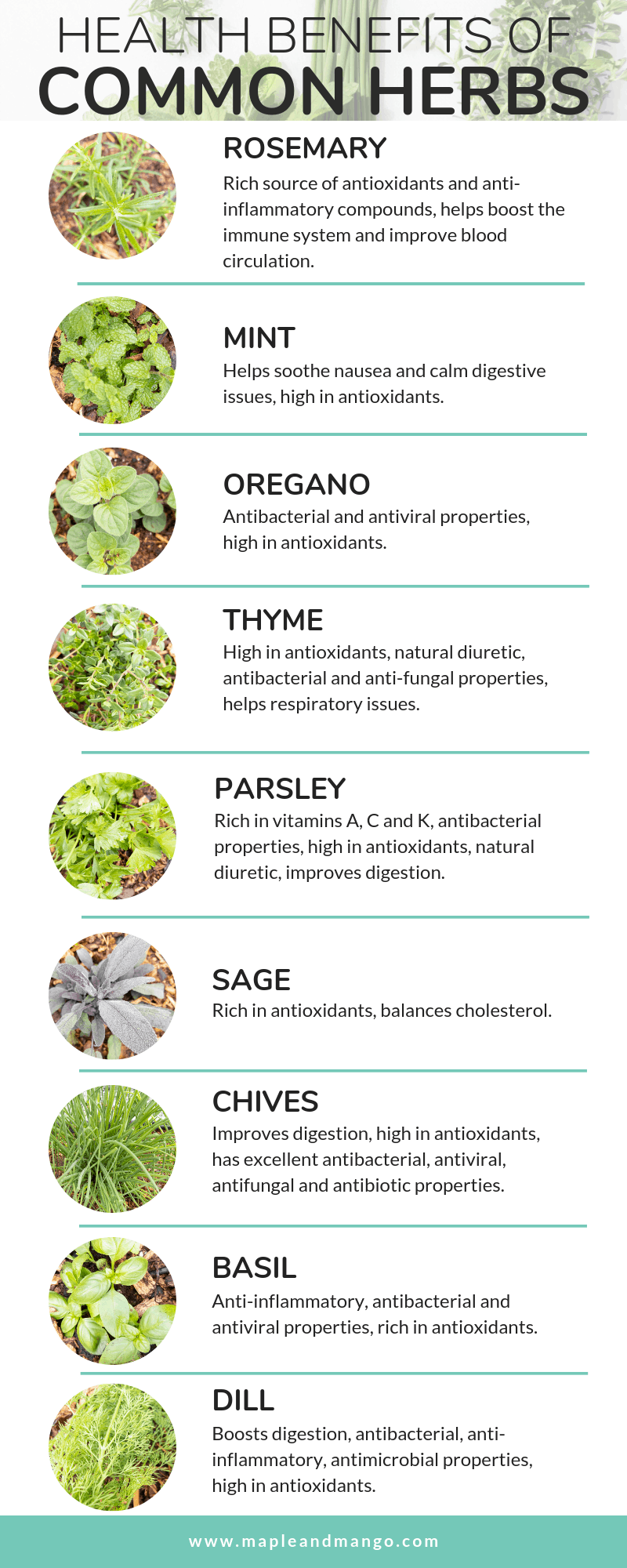 infographic on the health benefits of common herbs
