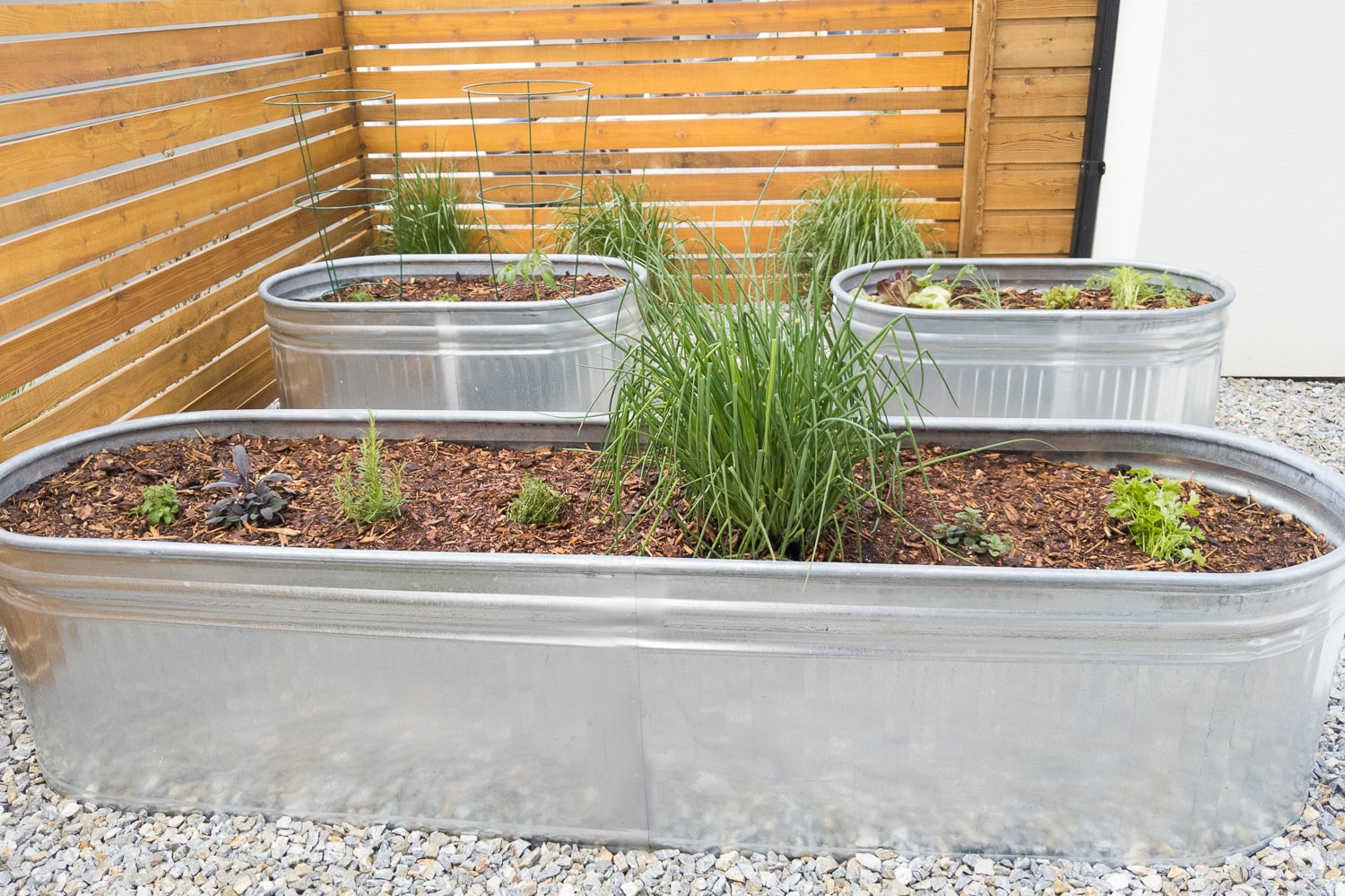 three galvanized steel planters with young herbs