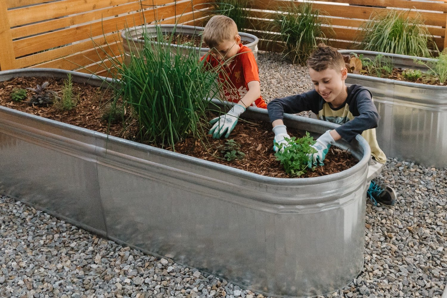 two boys planting herbs in galvanized steel planter