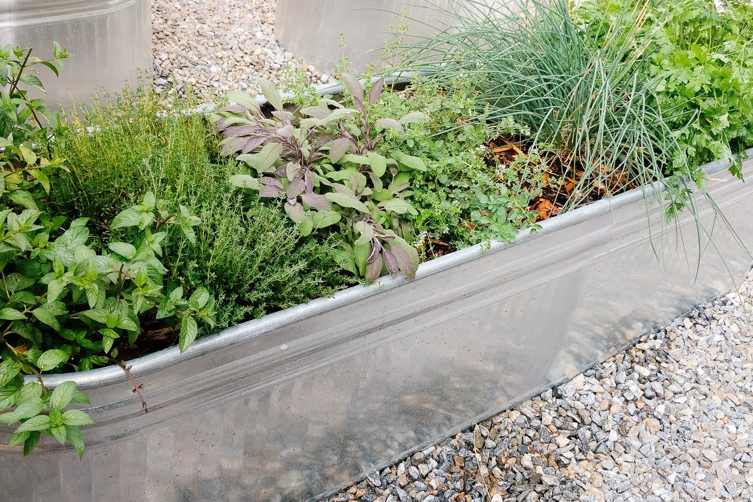 galvanized steel planter filled with a variety of fresh herbs