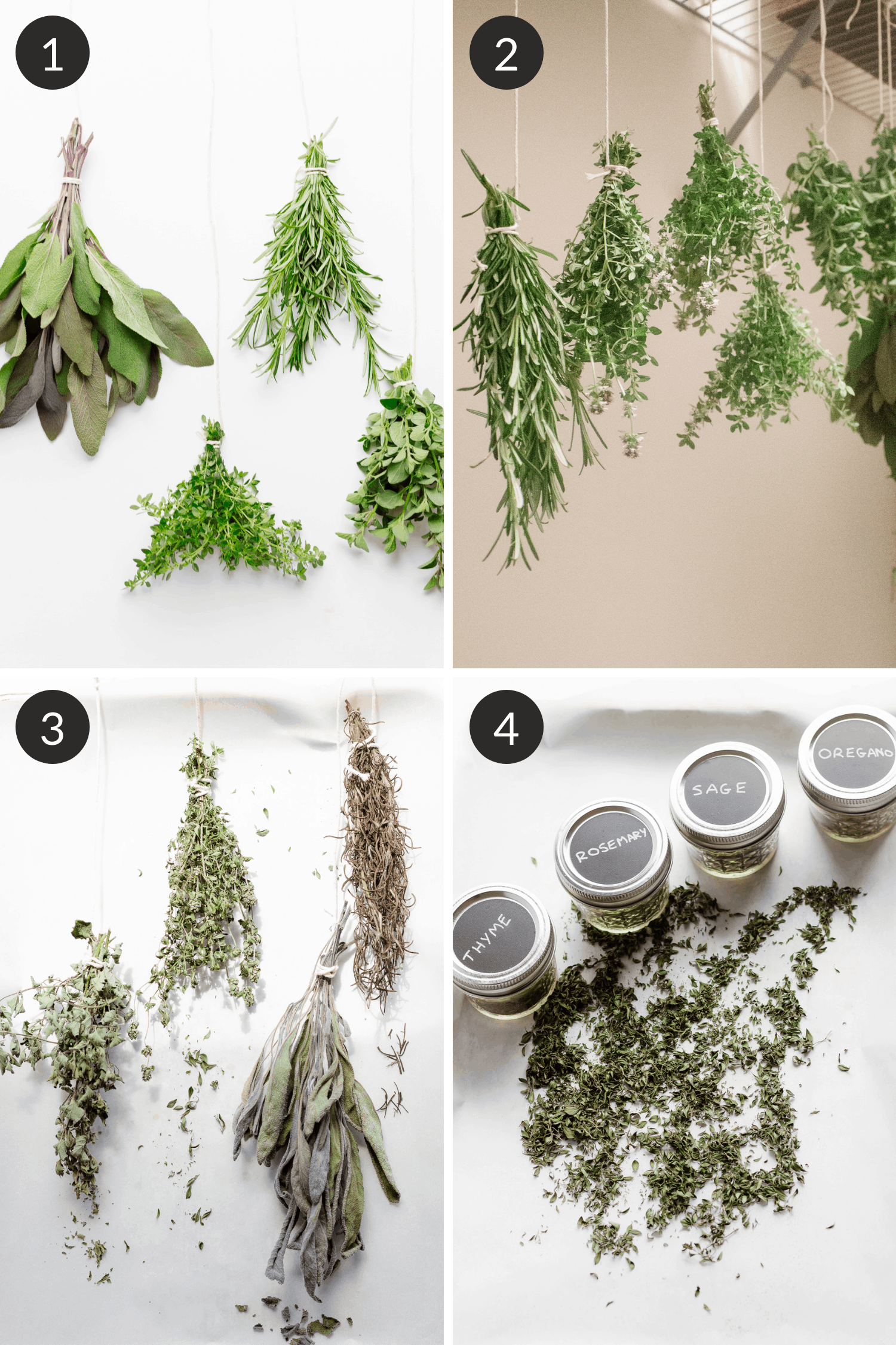 Collage of process on how to dry fresh herbs