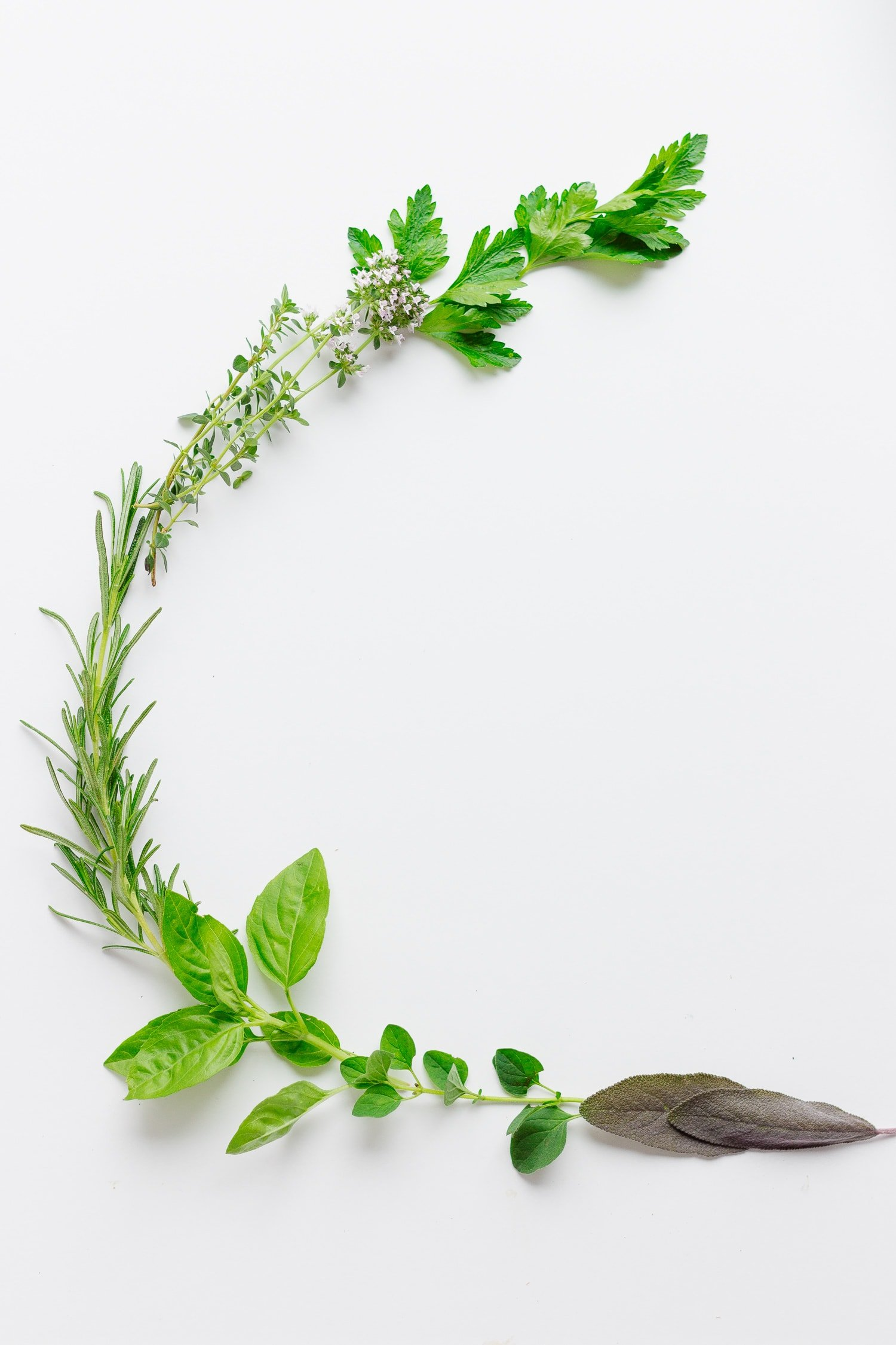 Fresh cut herbs arranged in a C shape on a white surface