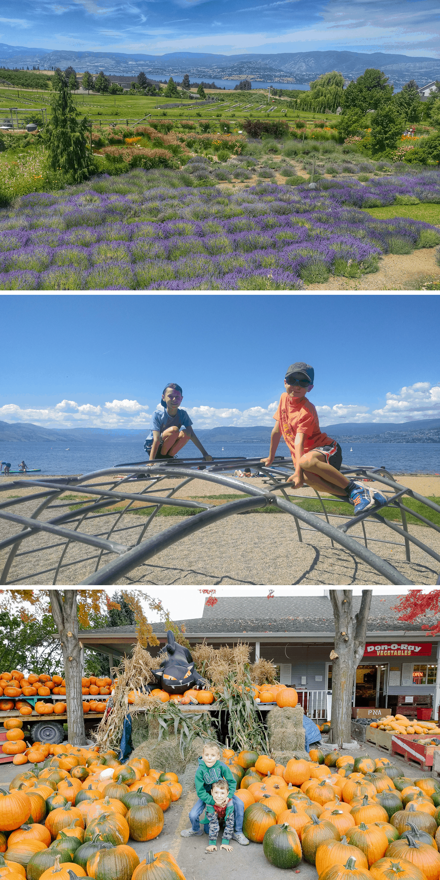 Three photos of Kelowna: lavender field, playground and pumpkins.