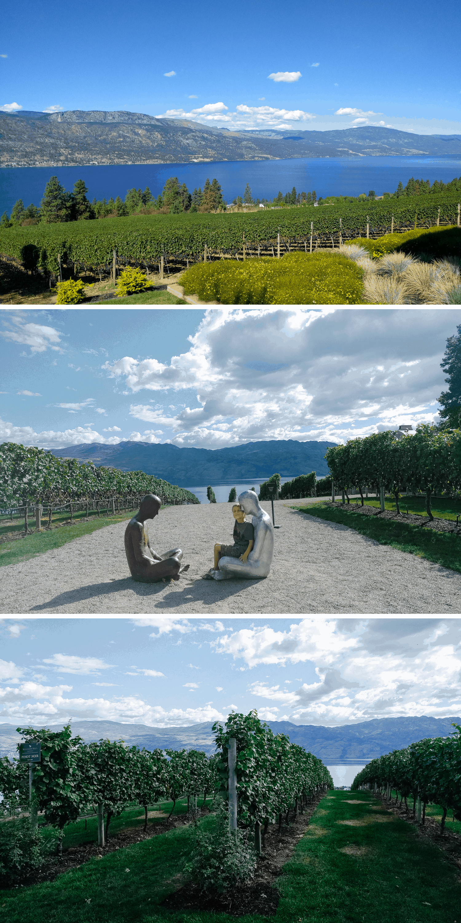 Collage of vineyards in Kelowna
